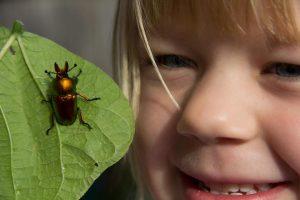 Freya & Stag Beetle
